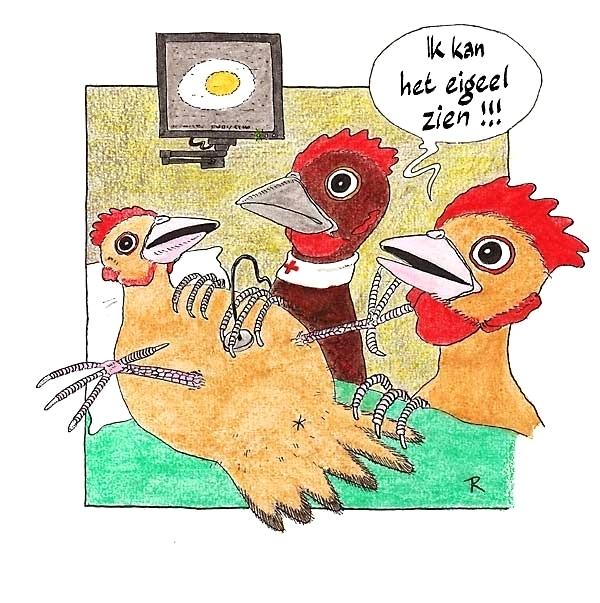 De Kippengyneacoloog Cartoon Dieren Medisch